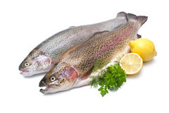 Rainbow trout Royalty Free Stock Photo