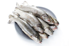 Rainbow trout. Fresh rainbow trouts on white background - food and drink stock image