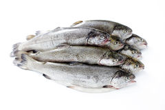 Rainbow trout. Fresh rainbow trouts on white background - food and drink royalty free stock image