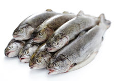 Rainbow trout. Fresh rainbow trouts on white background - food and drink royalty free stock images