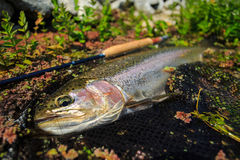 Rainbow trout in grass Stock Photo