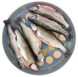 Rainbow trout isolated Stock Image