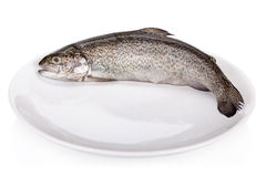 Rainbow trout isolated Stock Images