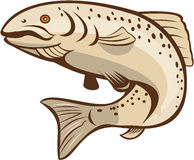 Rainbow Trout Jumping Cartoon Stock Image