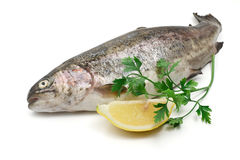 Rainbow trout with lemon Stock Images