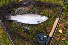 Rainbow trout like a fly fishing trophy Royalty Free Stock Photography