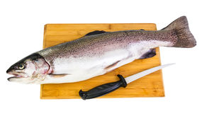 Rainbow trout like a healthy meal Royalty Free Stock Photo