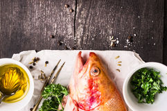 Rainbow trout,oil and spices on white paper. Food background with copy space Stock Image