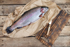 Rainbow trout (Oncorhynchus mykiss) Royalty Free Stock Photography