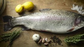 Rainbow trout stock video