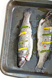 Rainbow trout. Raw fresh trout with basil, spice and lemon ready for cooking stock photo