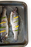 Rainbow trout. Raw fresh trout with basil, spice and lemon ready for cooking stock images