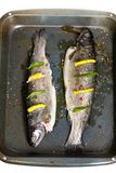 Rainbow trout. Raw fresh trout with basil, spice and lemon ready for cooking royalty free stock image