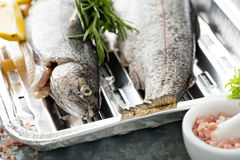Rainbow trout ready to be grilled. Rainbow trout on a foil dish ready to be grilled Royalty Free Stock Photography
