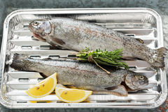 Rainbow trout ready to be grilled Royalty Free Stock Photo