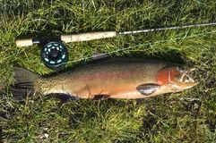 Rainbow Trout Rod & Fly Stock Image