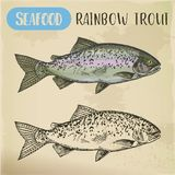 Rainbow trout sketch or coastal redband fish. Sketch of rainbow trout, steelhead or coastal, redband salmonid. Ocean or sea animal for restaurant menu or fishing stock illustration