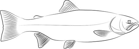 Rainbow trout. Sketch of wild Rainbow Trout Vector Illustration