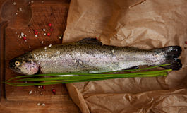 Rainbow trout. With spices over the wooden board Stock Photos