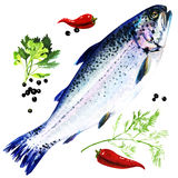 Rainbow trout with spices on white background Stock Photos