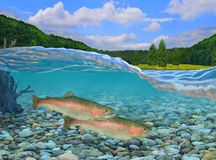 Rainbow Trout Underwater royalty free stock images
