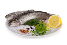 Rainbow trout on white. Rainbow trout isolated on white background Royalty Free Stock Photo