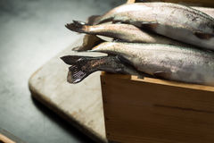 Rainbow Trout in a Wooden Crate. Tail fins of fresh rainbow trout in a wooden crate Stock Photography