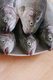 Rainbow trouts. Plate full of rainbow trouts on table stock photography