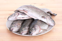 Rainbow trouts. Plate full of rainbow trouts on table royalty free stock photo