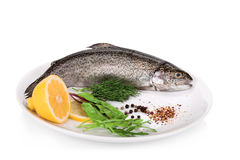 Rainbow trouts with lemon and greens isolated on white backgroun Stock Photography