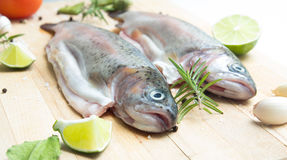 Rainbow trouts Stock Images