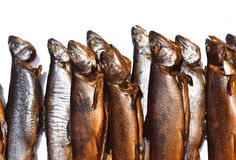 Rainbow trouts Royalty Free Stock Image