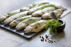 Rainbow trouts on a stone board Royalty Free Stock Image