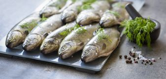 Rainbow trouts on a stone board Stock Image