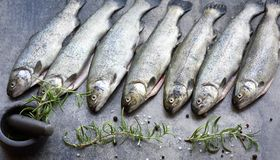 Rainbow trouts on a stone board with herbs. Raw rainbow trouts on a stone board with herbs stock photography