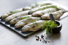 Rainbow trouts on a stone board with herbs. Raw rainbow trouts on a stone board with herbs royalty free stock photos
