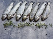 Rainbow trouts on a stone board Royalty Free Stock Photos