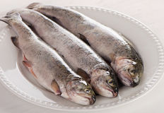 Rainbow trouts on a white plate. Selective focus stock photo