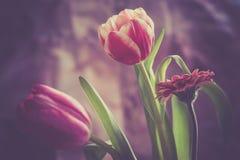Rainbow tulip. Flower boquet Stock Images