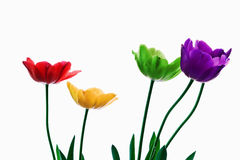 Rainbow Tulips. Row of rainbow colored tulips isolated on a white background Royalty Free Stock Photo