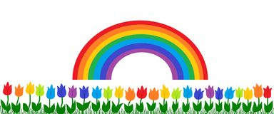 Rainbow And Tulips. Spring background with rainbow over green grass and tulips in rainbow colors Royalty Free Stock Images