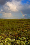 Rainbow and tundra Royalty Free Stock Photos