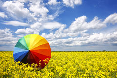Rainbow umbrella. In colza field stock image