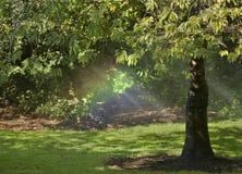 Rainbow under a tree. A small rainbow under a tree Stock Photo
