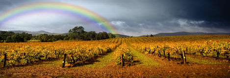 Rainbow Vineyard Stock Photo