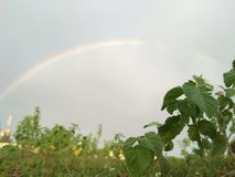 Rainbow. It was grew up yesterday stock photography