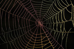 Rainbow web. Early in the morning dewdrops on a web were lit by iridescent light./ Rainbow web Stock Image