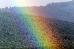 Rainbow in the woods. Rainbow in the crown of trees Stock Photos