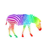 Rainbow zebra isolated on white background. Vector Royalty Free Stock Images