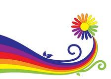 rainbowlike de marguerite Photo stock